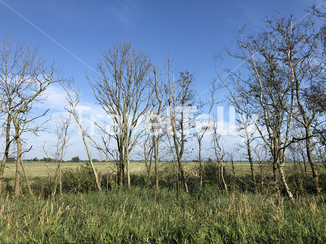 Trees around the Sneeker lake in Friesland The Netherlands