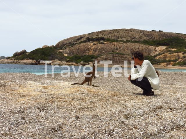 Girl looking at a baby kangaroo at Lucky Bay in Cape Le Grand National Park Australia