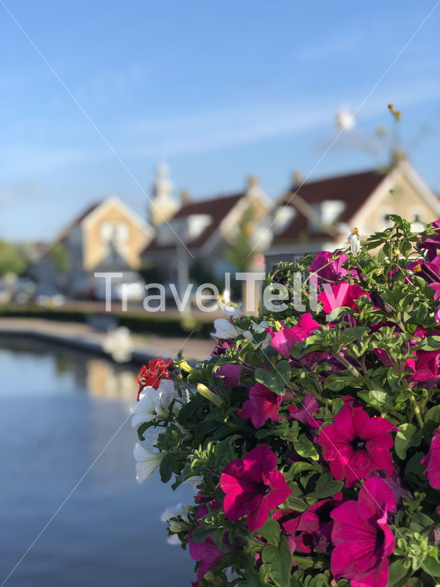 Flowers around a canal in Joure, Friesland The Netherlands