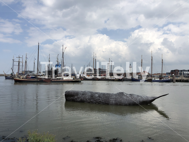 Sperm whale art object in the harbor of Harlingen, Friesland The Netherlands